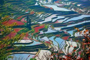 The Terraced Fields in Yuanyang