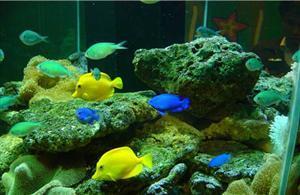 Changsha Ocean World