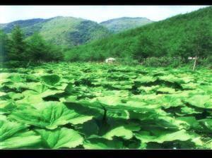 Laolongtan
