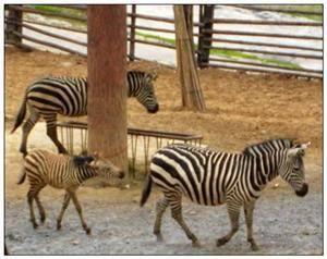 Paomaling Wildlife Park