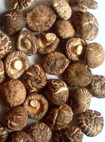 Kou Mo (wild Mushroom)