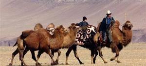 Inner Mongolian Naadam Grassland Festival
