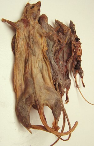 Ningha Dried (field) Mouse