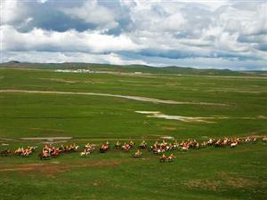 Naqu Horse Racing Festival