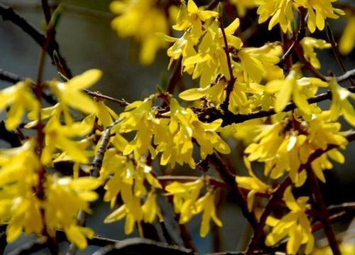 spring of Jiamusi