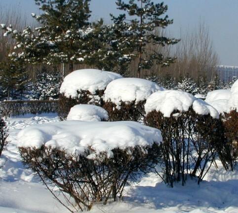 winter in Jiamusi