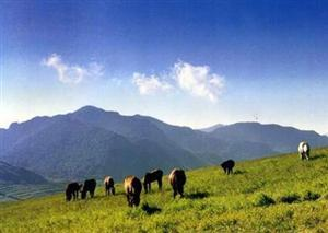 Lingshan Scenic Area