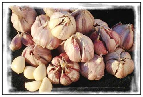 Minle Garlic