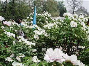 Shenzhou Peony Garden