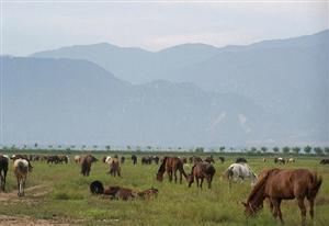 Kangxi Grassland