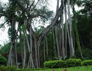 Xishuangbanna Virgin Forest Park