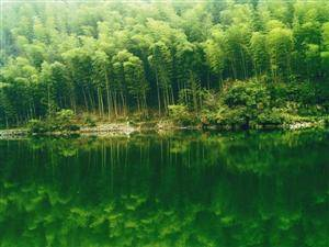 The Sea Of Bamboo Scenic Area