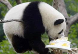 Panda Room in Chongqing Zoo