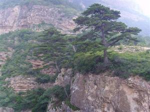 Mt. Hengshan
