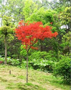 Yuer Garden