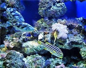 Dalian Shengya Ocean World