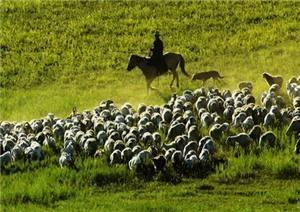 Dumeng Grassland