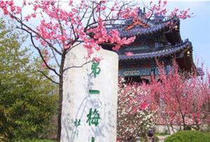 Plum Blossom Mountain