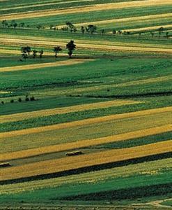 Chahanzhuoer Grassland