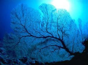 Qinhuangdao Xinao Underwater World