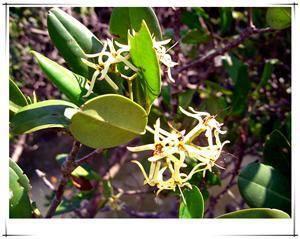 Mangrove Natural Reserve