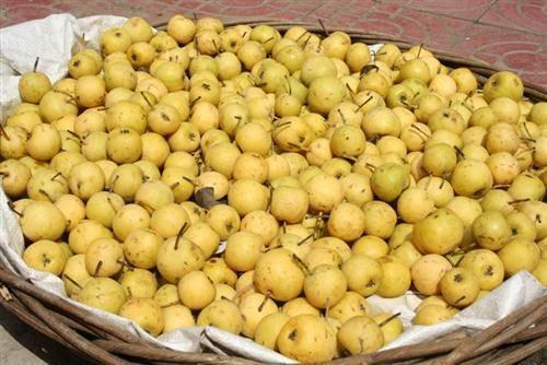 Xiangshui Pear