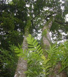 Luoshan Nature Reserve