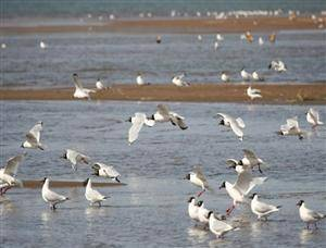 Ordos Relict Gull National Natural Reserve