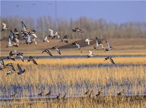 Halahai Wetland