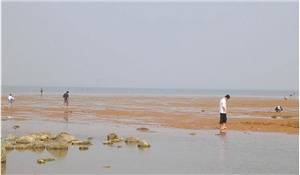 The Clam Mound of the Golden Beach at Bohai Sea