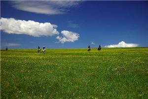 Grassland in the Sky