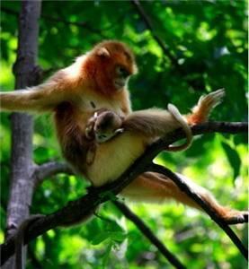 Wanglang Nature Reserve