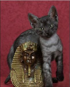 The Egyptian Cat