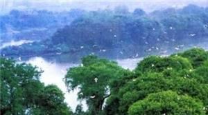 Jiangkou Birds Island