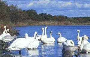 The Swan Lake Scenic Area