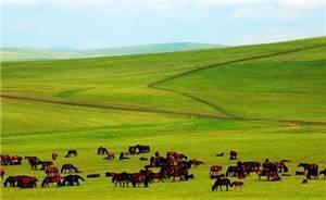 Baiyinxile Pasture