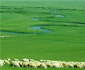 Xilinguole Prairie