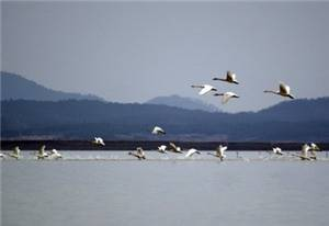 Shengjin Lake Nature Reserve