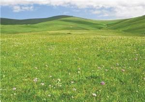 Buluke Prairie