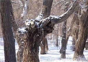 Yanerwo Scenic Area
