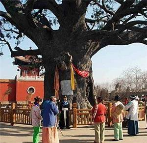 Hongtong Grand Pagoda Tree