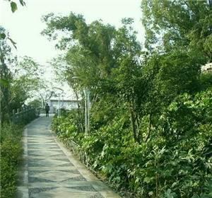 Rishe Garden