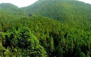 Xiajiagou Forest Park
