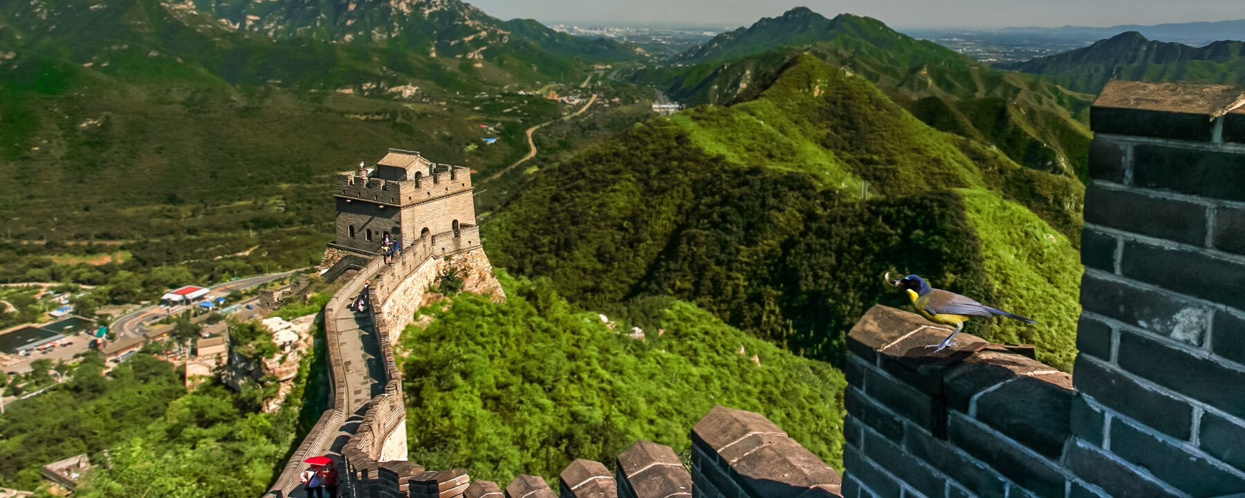 Early Bird special for China Top tours