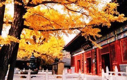Hongluo Temple