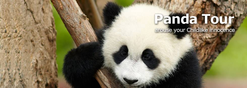 China Panda Tours, arouse your chiildren heart