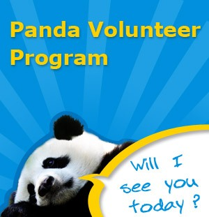 1-Day Panda & Chengdu Highlights Tour