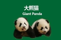 "The Word ""Panda"""