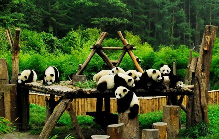 Habitat of Giant Panda