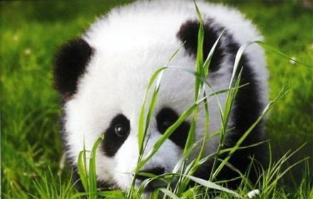 Bifeng Gorge Panda Base